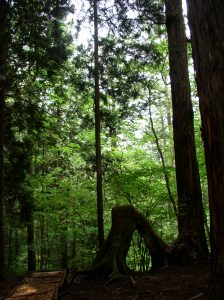 木こころよい森